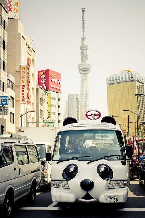 panda bus